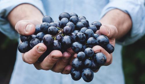 uva in mano