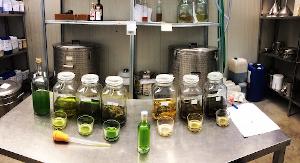 Fasi della produzione per la misura del tasso alcolico