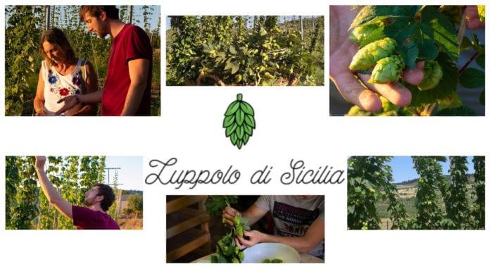 Luppolo di Sicilia: il primo luppoleto siciliano baciato dal sole del meridione