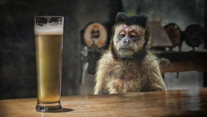 Birra doppio malto: facciamo chiarezza su un mito da sfatare!
