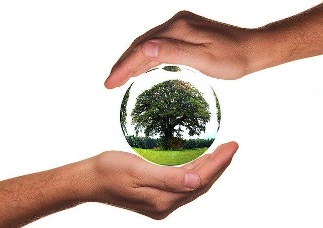 mani che proteggono un albero